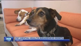 Veterinarians: Dental health important for dogs, cats