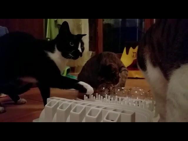 Essens-Spiele in der Katzenvilla