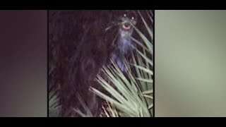 10 INCREDIBLY STRANGE & MYSTERIOUS PHOTOS THAT CAN SCARE ANYONE