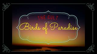 THE CULT - BIRDS OF PARADISE