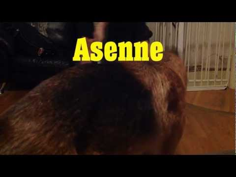 Roni - Asenne [Music Video]