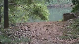 Ila kozhiyum shishirathil sung by Bibu Pappachan