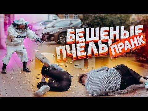 ПЧЁЛЫ УБИЙЦЫ ПРАНК / ПОДСТАВА и реакция на диких пчел / Вджобыватели