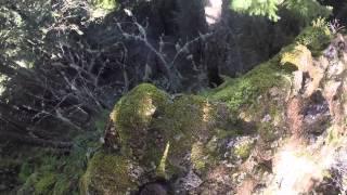 RuCKeL RIdGE up on the CAtWaLK (Simple Minds cut)