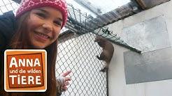 Frech wie ein Marder  (Doku)  Reportage für Kinder | Anna und die wilden Tiere
