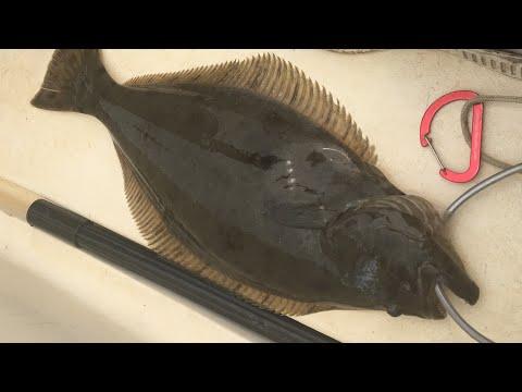 Halibut: Catch, Clean, + COOK! (Humboldt Bay, California)