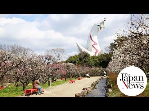 Plum grove in Expo '70 Commemorative Park - The Japan News