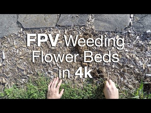 Relaxing 12 Minutes: Weeding the Flower Beds in 4k