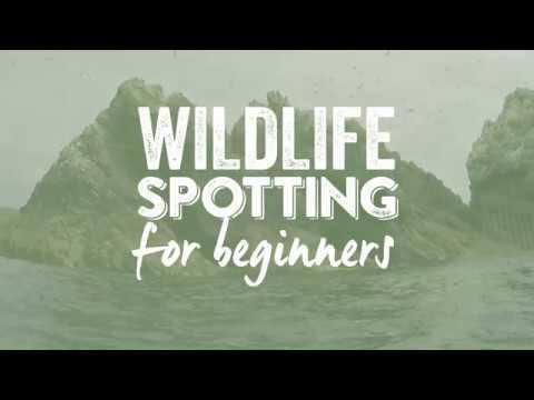 Wildlife Spotting in Alderney