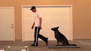 Ava (german Shepherd) Boot Camp Dog Training Video