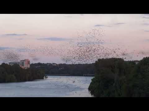 2017-08-22 - Austin, TX bat emergence from the Congress Ave Bridge