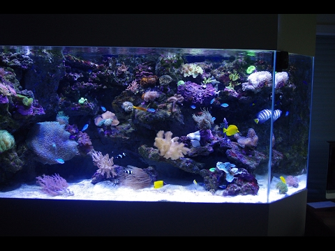 De la fabrication à la livraison : Aqua Art Design Aquarium sur mesure