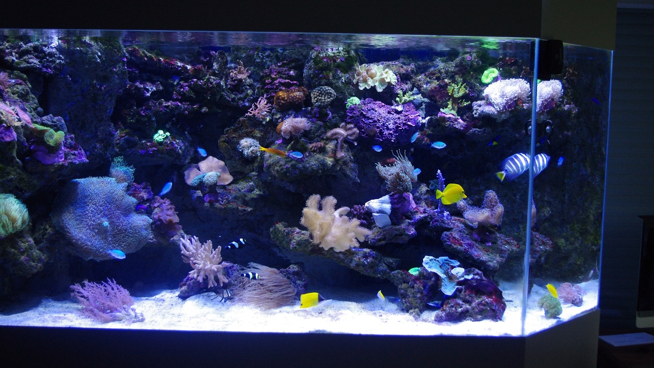 de la fabrication la livraison aqua art design aquarium sur mesure youtube. Black Bedroom Furniture Sets. Home Design Ideas
