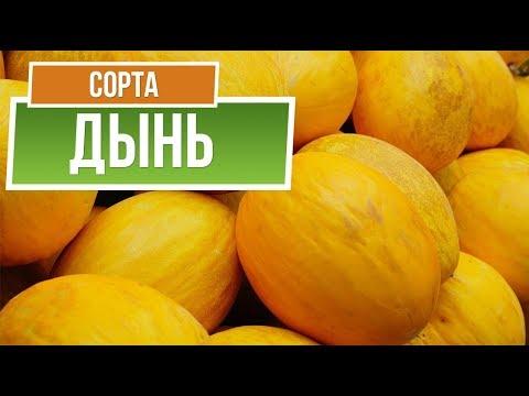 Лучшие Сорта Дыни для Средней Полосы ✔️  Какую Дыню посадить | интернет | средней | магазин | семена | полосы | огород | лучшие | гарден | сорта | полос