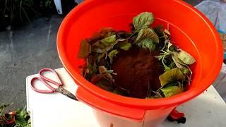 (阿美美 )廚餘堆肥的製作 有機  咖啡渣盈皮粗糠How to Make Compost thumbnail