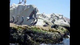 Kayaking California Central Coast