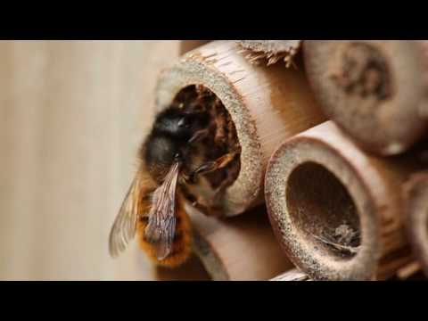 Bees of the United Kingdom - Blooms for Bees