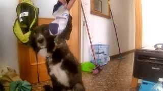 Smelly Feet Can Kill
