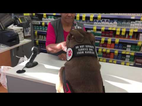 Service Dog helps check out at Walgreens