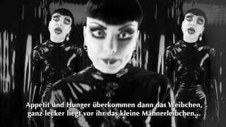 Grausame Töchter - Wie eine Spinne (offizielles Video)