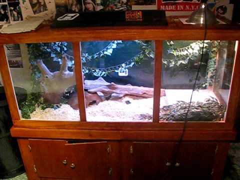 wooden ball python cage 2
