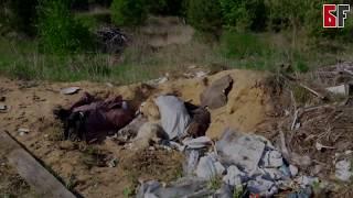 В Белорецком районе нашли тела собак на мусорной свалке