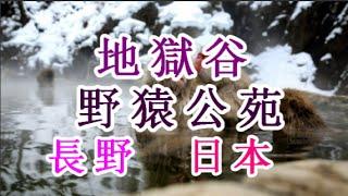 日本之旅:長野縣地獄谷野猿公苑在地獄谷野猿公苑和猴子一起泡溫泉長野2...