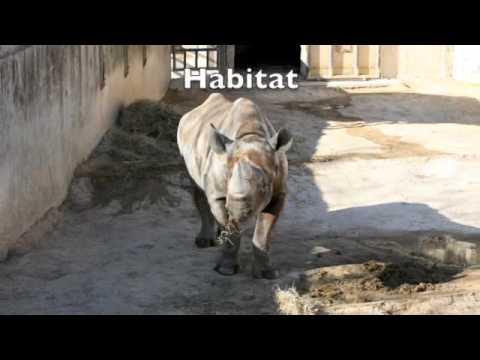Life in Captivity - Sababu 2009
