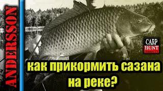 Рыбалка на Кубани.Как прикормить сазана на реке? Личный опыт и совет...