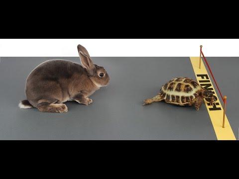 Отличная стратегия для бинарных опционов Черепаха