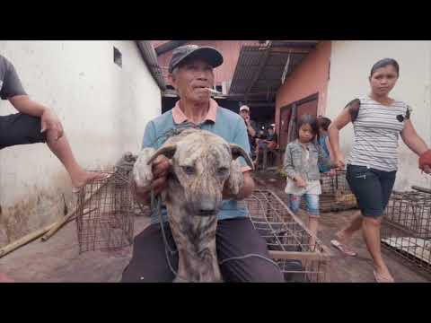 Bobby was rescued from a market during our investigations in North Sulawesi