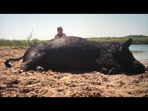 Real Texas Hog Hunting