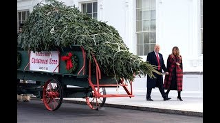 Árbol navideño proveniente de Carolina del Norte adornará la Casa Blanca