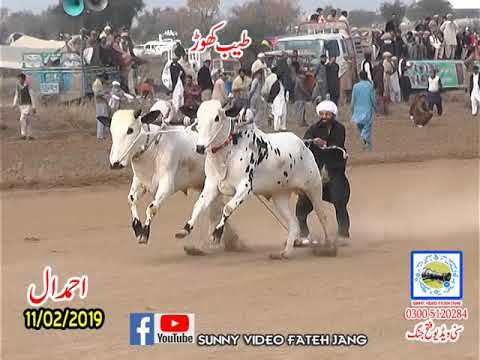 Bul Race In Pakistan Sunny Video Fateh Jang 11 02 2019 NO2  ..