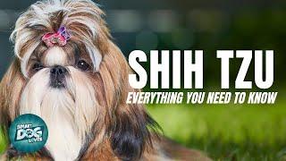 Shih Tzu Dog Breed Guide | Dogs 101  Shih Tzu