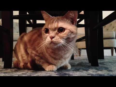 Secret Lives of New York Cats