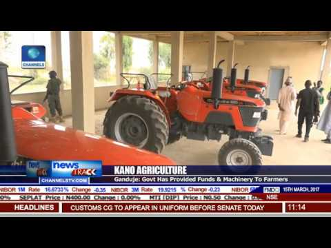 Kano Agriculture: State Begins Wheat Harvest Week