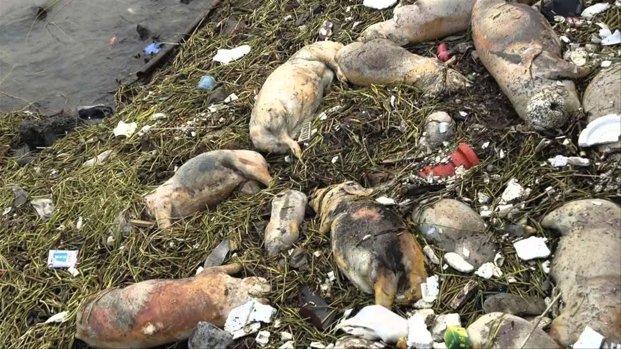 Kết quả hình ảnh cho ô nhiễm môi trường đất