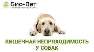 Кишечная непроходимость у собак