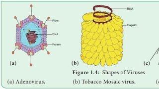 Tobacco mosaic virus (lecture in Hindi)