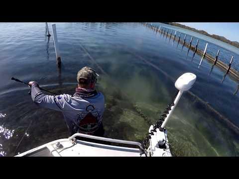 96 CM Wallis Lake Croc ! - Forster N.S.W