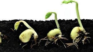 277.Стоит ли проращивать семена в улитке