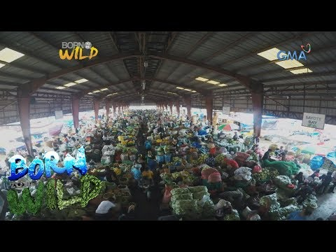 Born To Be Wild: The Vegetable Trading Posts In La Trinidad, Benguet