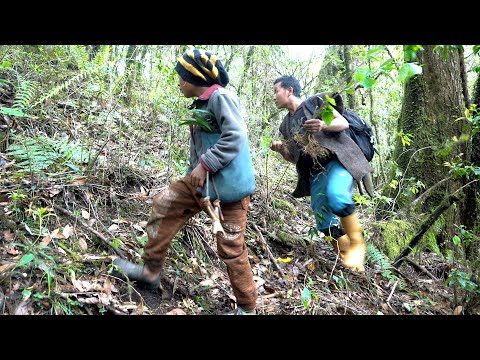Life With Nature  ( Video – 5 ) Hunting Jungle whole day   
