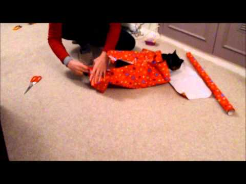 How (not) to wrap a cat for Christmas
