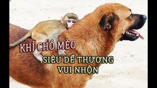 Những chú khỉ vui vẻ rất thích chọc ghẹo chó mèo - TÚ NGUYỄN CHANNEL