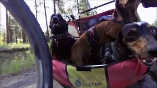 Bike Rides Are Fun For Three Dachshunds