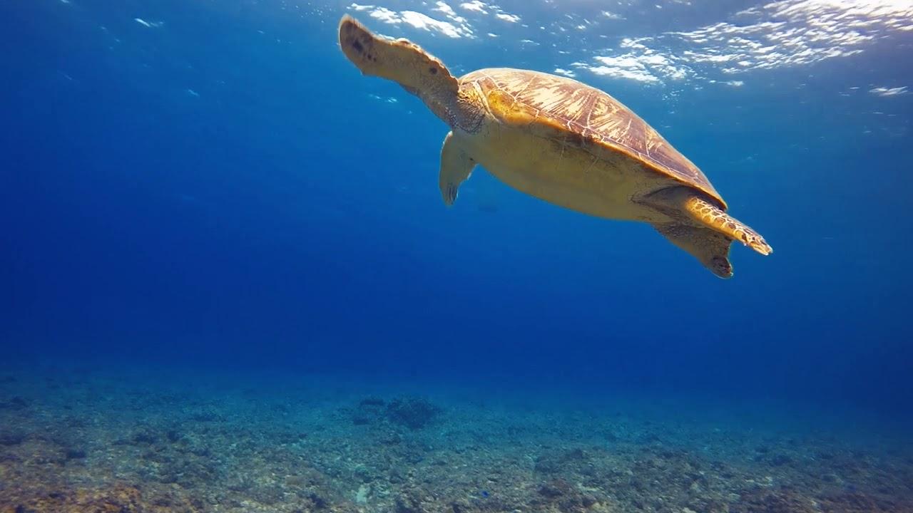 2 Minutes of Relaxing Ocean Animals