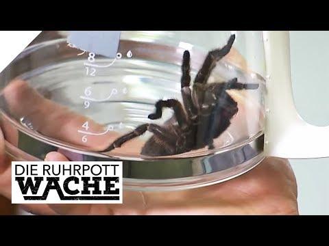 Gefährlicher Fund: Von Vogelspinne gebissen! | Die Ruhrpottwache | SAT.1 TV