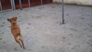 Поддержите канал , приют животных собаки Читы